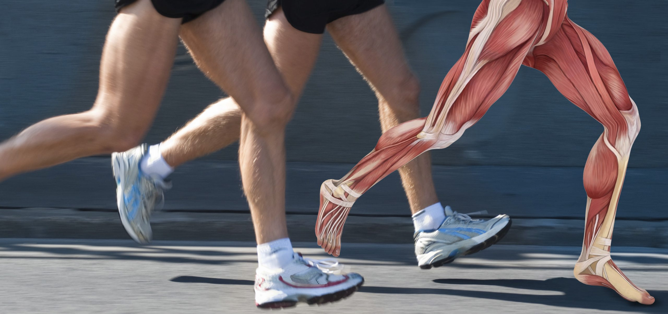 New Tendon Science: Clinical Management Implications